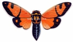 Vicky Pratt orange cicada WATERMARK (800x459)